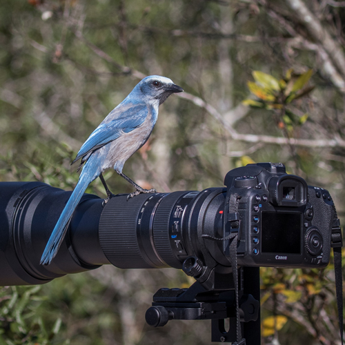 Bird Photography at Lake Apopka North Shore