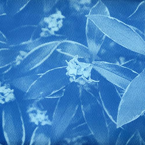 Introduction to Cyanotype Printmaking